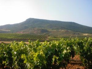 Vinogradi v La Rioji.